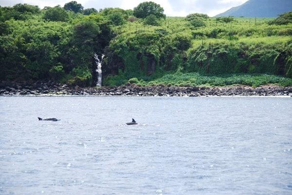 11_Delfine-Delfin-Tour-Mauritius-Ufer