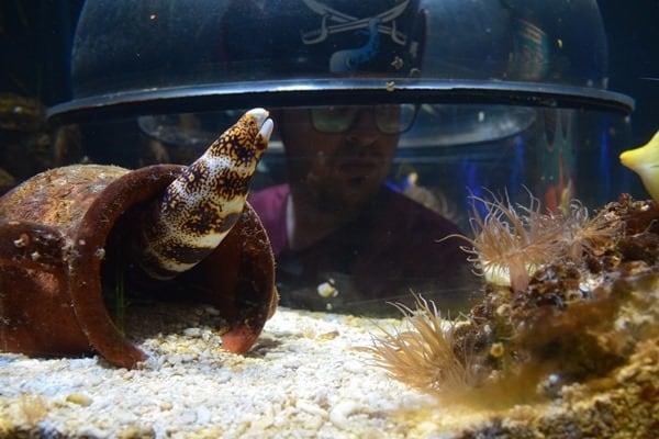Unterwasserwelt erforschen SeaLife Muenchen Piratensommer