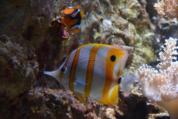 Meerwasser-Salzwasser-Aquarium-Clownsfisch-Nemo-SeaLife-Muenchen.jpg