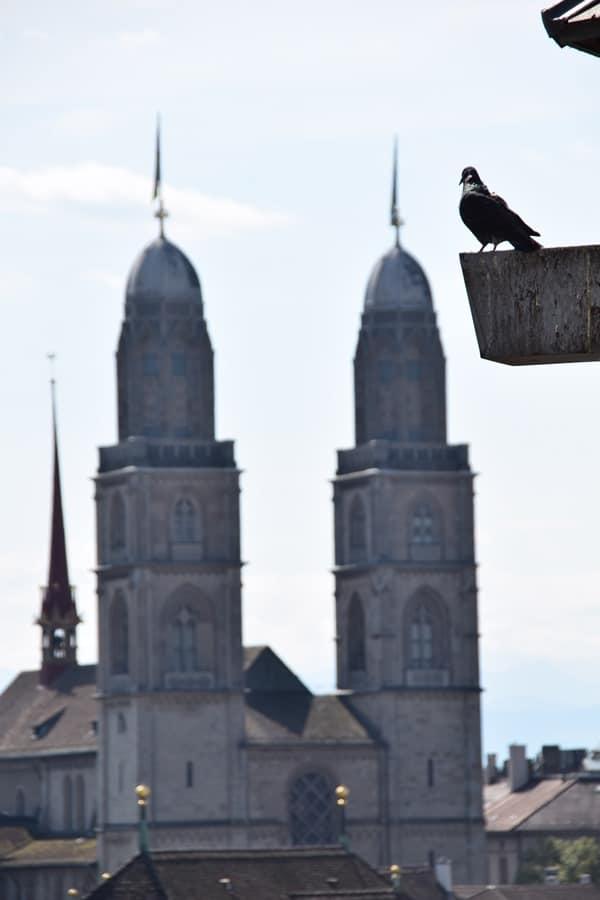 Zürich Sehenswürdigkeiten Schweiz Taube Grossmünster