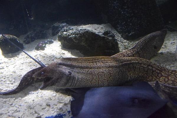 Muraenen Rochen SeaLife Muenchen