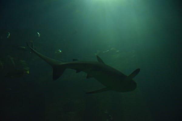 Haifisch Aquarium SeaLife Muenchen