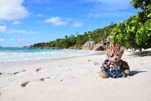 Kreuzfahrtblog Maskottchen Jack Bearow Reiseblog Traumstrand Anse Lazio Praslin Islandhopping Seychellen