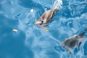 01_Fruehstueck-mit-Fischen-Katamaran-Seychellen