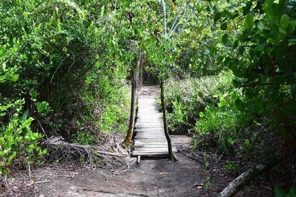12_Holzsteg-im-Naturschutzgebiet-Marine-National-Park-Curieuse-Seychellen