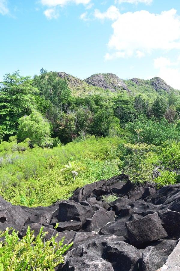 19_Anblick-beim-Wandern-im-Naturschutzgebiet-Marine-National-Park-Curieuse-Seychellen