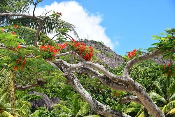 32_Ausblick-Traumstrand-Naturschutzgebiet-Marine-National-Park-Curieuse-Seychellen