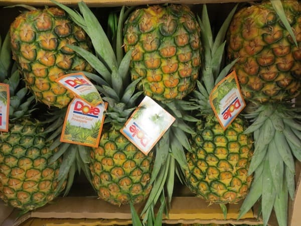 19_Dole-Plantage-Ananas-Oahu-Hawaii