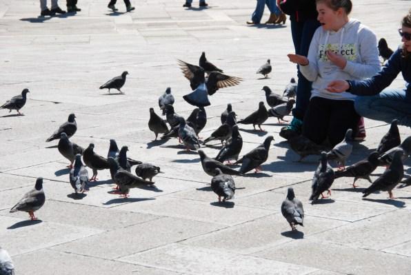 Venedig Tauben füttern verboten am Markusplatz