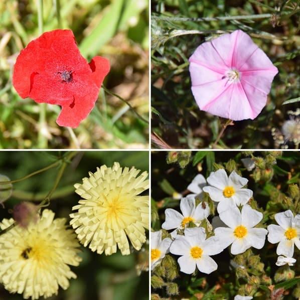Wandern Naturpark Kap Kamenjak Frühling Blumen Istrien Kroatien