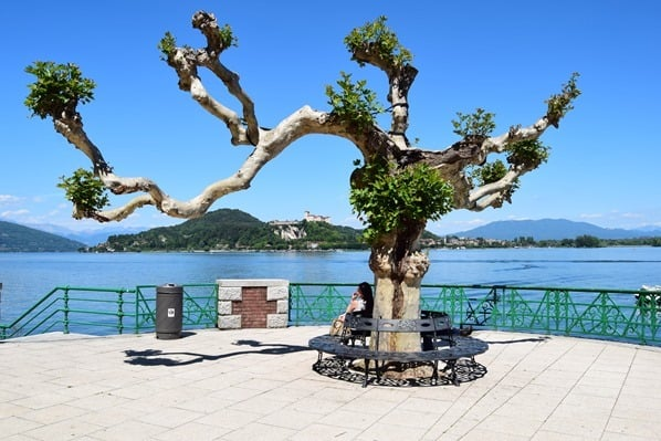 Arona Lago Maggiore Uferpromenade Baum Italien