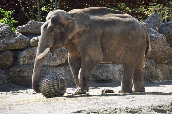 Elefant Fotosafari Tierpark Hellabrunn Zoo Muenchen