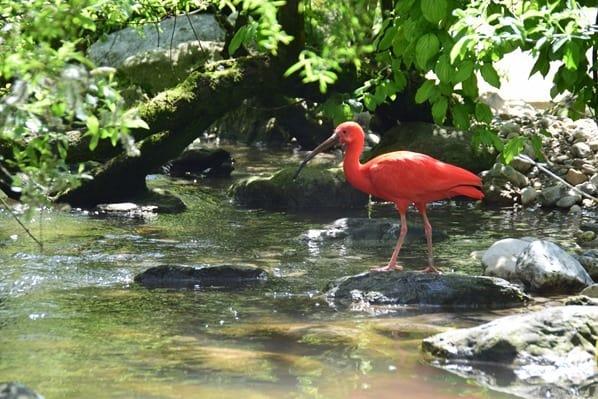 Roter Sichler Fotosafari Tierpark Hellabrunn Zoo Muenchen