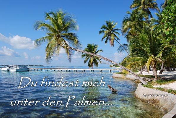 schöne Urlaubssprüche Du findest mich unter den Palmen…
