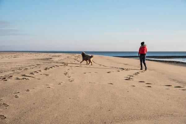 Sylt-mit-Hund-Strand-Nordfriesland-Nordsee