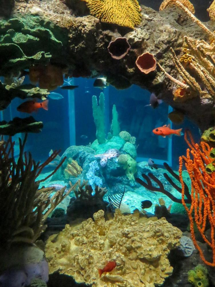 Städtereise Lissabon Sehenswürdigkeiten Aquarium Oceanário de Lisboa Portugal