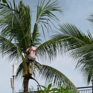 2011-03-16 Bali 013