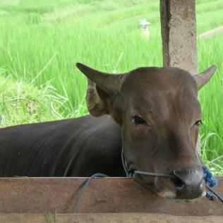 2011-03-18 Bali 103