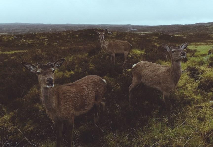 Highlands.jpg