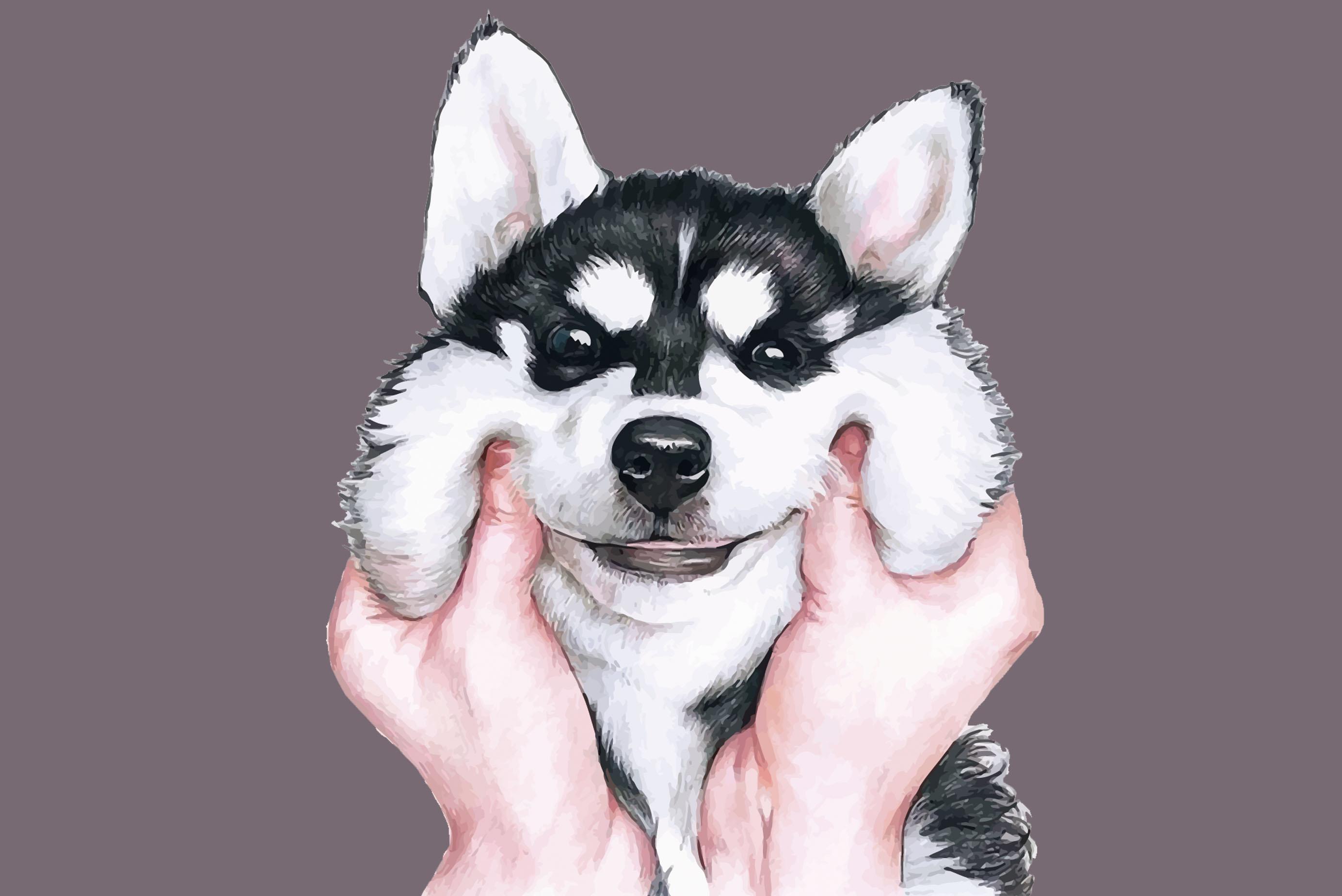 Kleine Hunde mit großen Ansprüchen