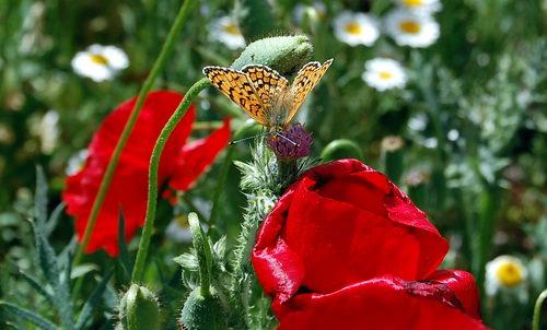 Spring wild flowers growing west of Konya, Turkey. Photo by Ferrell Jenkins.