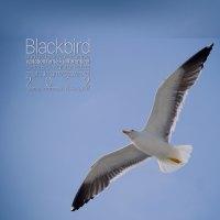 Blackbird <br /> Bird Installation Project <br /> Sir Paul McCartney