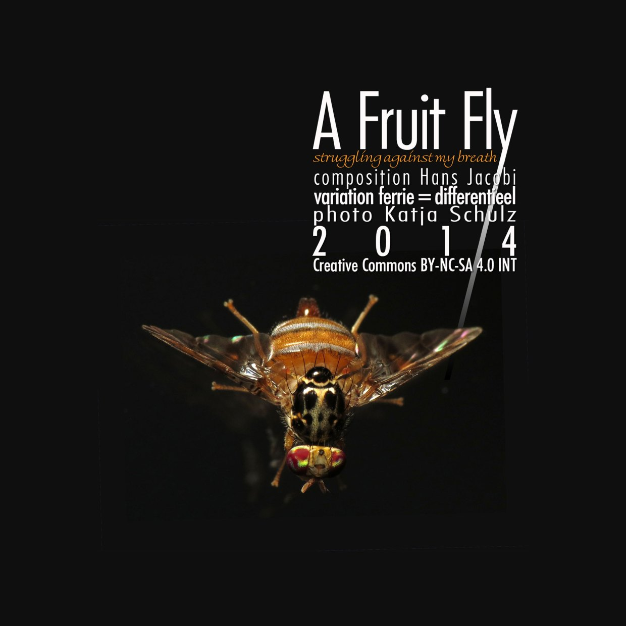 A Fruit Fly cover