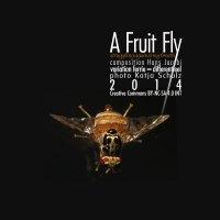 A Fruit Fly <br /> struggling against my breath <br /> Hans Jacobi