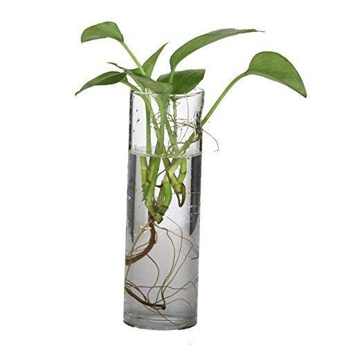 Vaso cilindro vetro diam. cm.10 H20