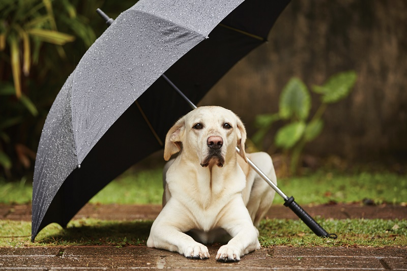 3 KEYS TO PROTECT YOUR HOME FROM SUMMER STORMS