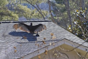 Prepare Your Roof For Summer With These 4 Tips