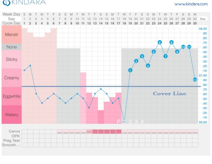ovulation cover line