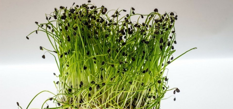 Watercress Fertility Benefits