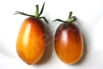 Tomate Indigo Kumquat