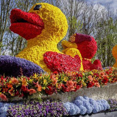 Route de la parade des fleurs