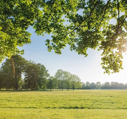 Even more photos of Gunnersbury Park looking resplendent in the sunshine......