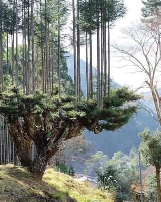 May be an image of nature and tree
