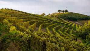 Paesaggio del Monferrato
