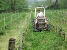 Chateau la Grolet - organic vineyard
