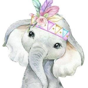 Kis elefánt