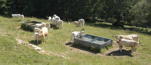Rando-Pasteau-2-abreuvement-des-troupeaux-1-e1556267685866