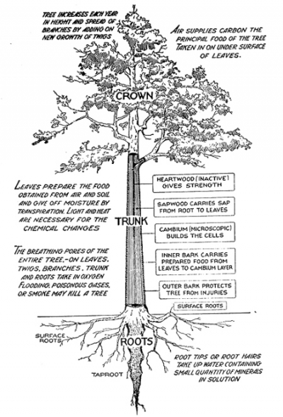 My Year with Trees | The Fetzer Institute