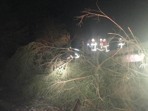 Baum auf Gleise 23.02.16