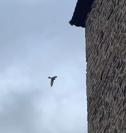 Falke fliegt davon