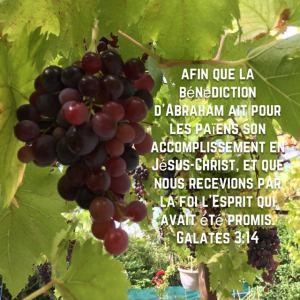 vitamine j l'obéissance vous permettra de porter beaucoup de fruit.