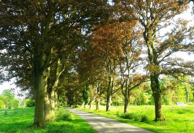 Trees in Hornsea, East Yorkshire