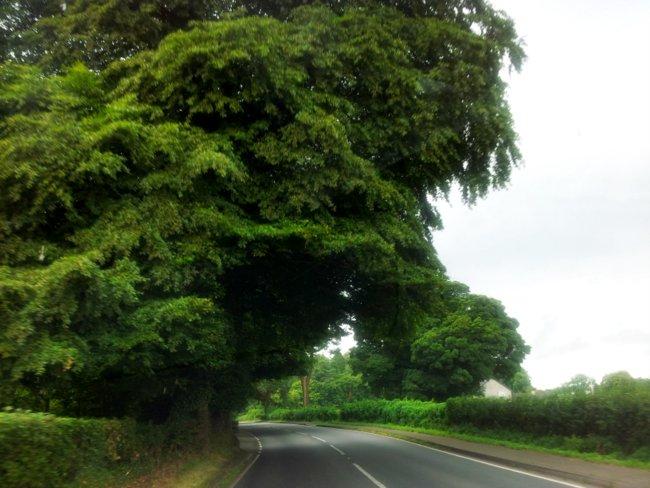 enniskillen trees