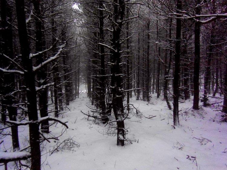 Clain Wood, Osmotherley - North York Moors