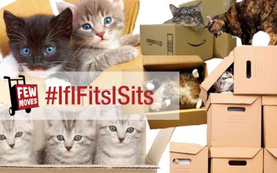 Packing With Cats – If I Fits I Sits