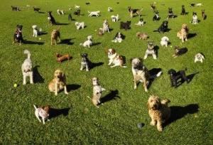 millbook-dog-park